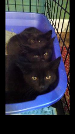 Stigmatizations of black cats