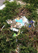 Geese making a nest out of masks and trash they picked up. Photo Credit: Hannah Levenson
